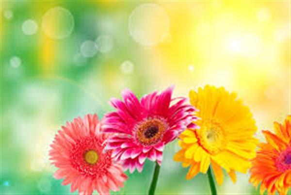 downloadflowers.jpg
