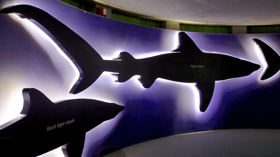 Baltimore >> CMIT North Middle School's National Aquarium Field Trip