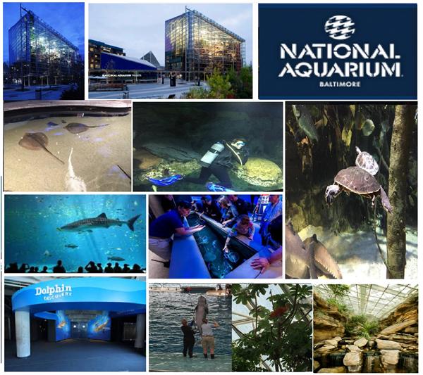 National Aquarium Educational Trip 5.jpg