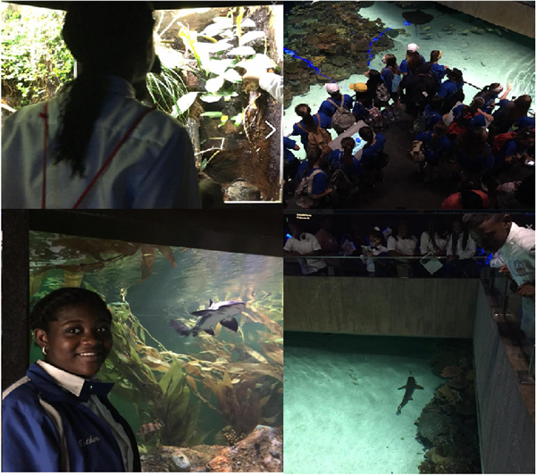 National Aquarium Educational Trip 2.jpg