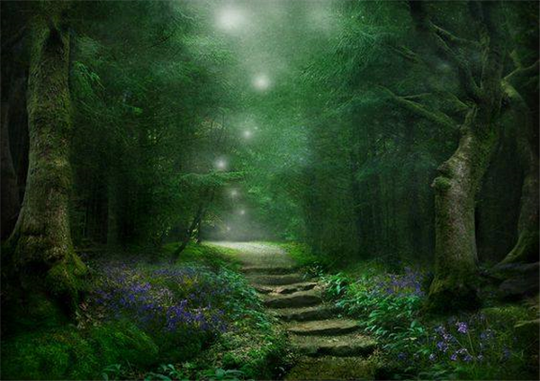 Enchanted-Forest.jpg