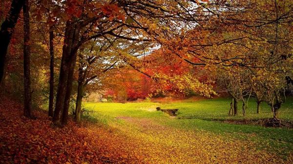 Autumn+Leaves1.jpg