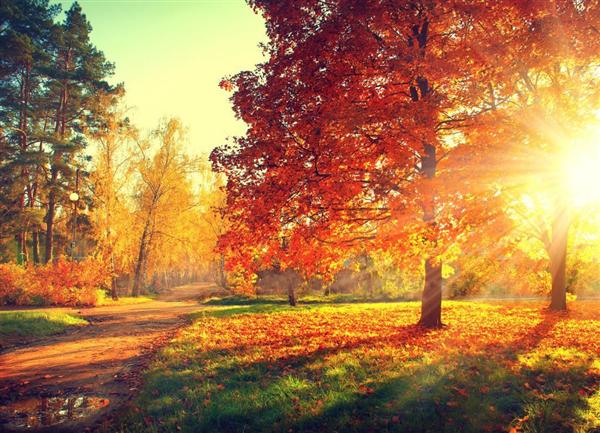 autumn pic.jpg
