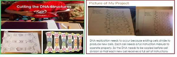 DNA Replication Model - Perfect 2.jpg